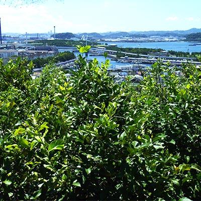 金沢区柴の風景
