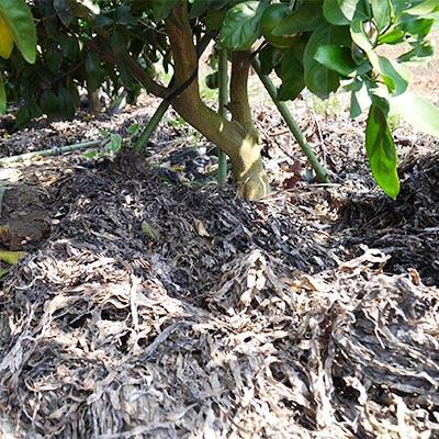 アオモやアオサを肥料にしてます